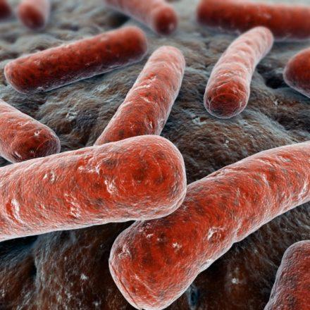 Clostridium difficile Diagnostik im Stuhl