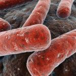 Infektionsrisiko durch Rohmilch