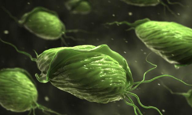 Trichomonas vaginalis Infektionen – ein neues diagnostisches Verfahren